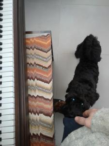 Piano Dog | Cycling Piano Tuner