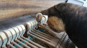 Cat inspecting hammer
