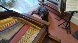 Dog and piano
