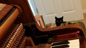 Piano Cat | Cycling Piano Tuner