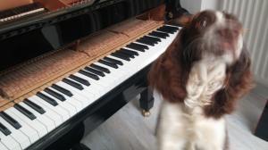 Piano Dog | Cycling Piano Tuner